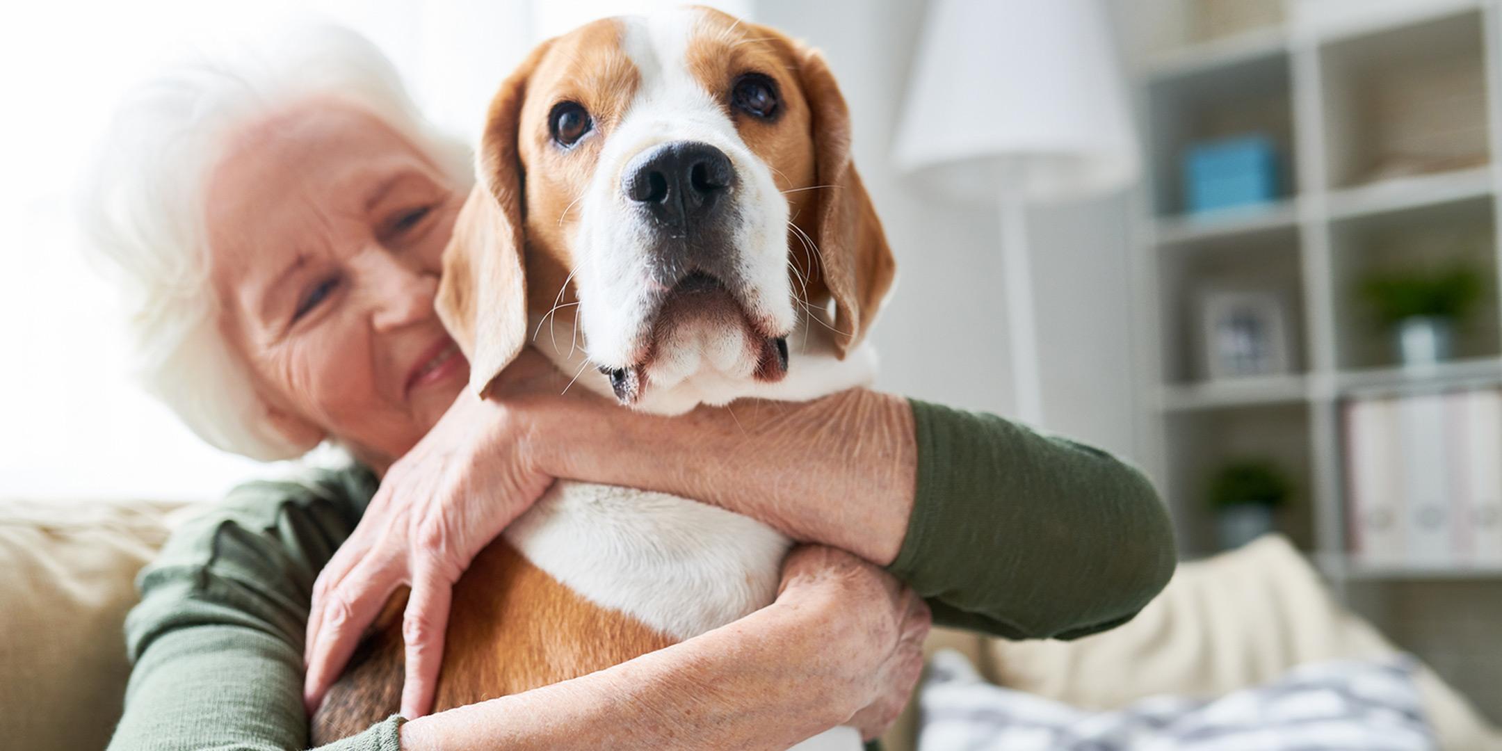 Pet-terapia-em casa
